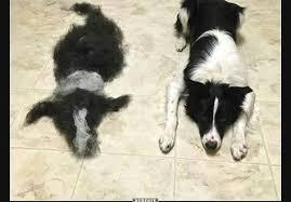 Hund Gebürstet Zack 1 Hund Mehr Lustige Bilder Sprüche Witze
