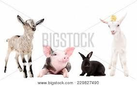 farm animals together. Unique Animals Agriculture Animal  Throughout Farm Animals Together G