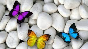 Colorful Butterflys Images Hd ...