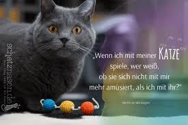 Süße Katzen Sprüche Englisch Gute Bilder