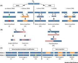 Genome Editing Characteristics Of Genome Editing Mutations In Cereal Crops Trends