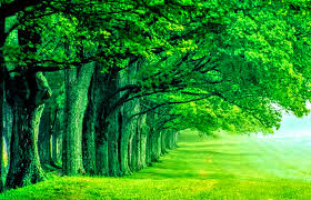 nature wallpapers high resolution green.  Nature To Nature Wallpapers High Resolution Green Q