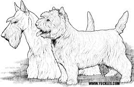 Small Picture Cairn Terrier Coloring Page by YUCKLES
