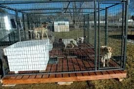 dog pen flooring outdoor run in tasty kennel ideas indoor