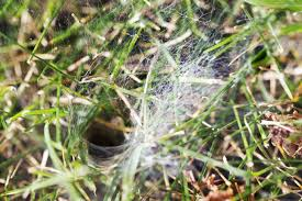Spider Web Identification Chart The Most Common Types Of Spiders In Texas The Bug Master