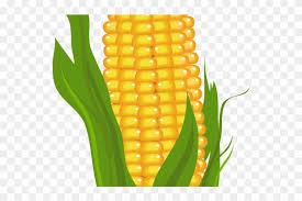 ear of corn clipart. Plain Corn Ear Of Corn Clipart  Sweetcorn And L