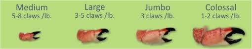 Order Stone Crabs Online Chart Fresh Florida Stone Crab