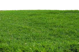 grass png. Contemporary Grass Read It In Grass Png P