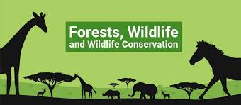 conservation of forest and wildlife wildlife conservation wildlife conservation