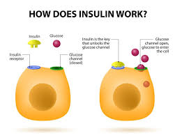 Type 1 Diabetes And Insulin Types Of Insulin Where To