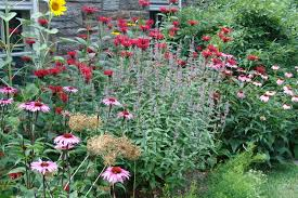 Small Picture Monarda is for the hummingbirds The Scott Arboretums Garden Seeds