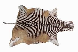 large natural zebra skin hide area rug 132 x87 by hill auction gallery bidsquare