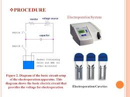 Electroporation And Microneedles Ppt Video Online Download