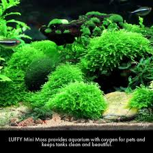 Mario Brothers Aquarium Decorations Awesome Fish Tank Ideas You Will Love Well Done Stuff