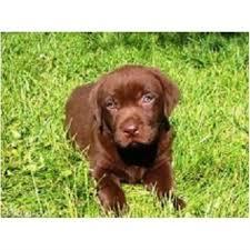Pet Minder Dog Walkerr Quarry Bank West Midlands Dy5 2du
