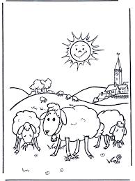 Schapen In De Zon Huis En Boerderijdieren
