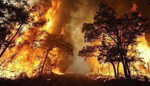 Fire Incident Feeds