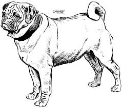 Small Picture Dog Breed Coloring Pages Coloring Home