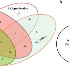 Venn Diagram Plants A Venn Diagram Showing Plant Growth Promoting Activity Of Bacterial