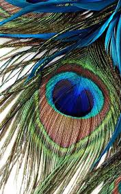 peacock wallpaper for mobile. Modren Peacock HD Peacock Feather Wallpaper 11 Screenshot 13 In For Mobile
