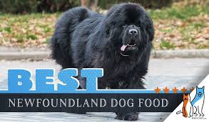 Newfie Puppy Growth Chart 6 Best Newfoundland Dog Foods Plus Top Brands For Puppies