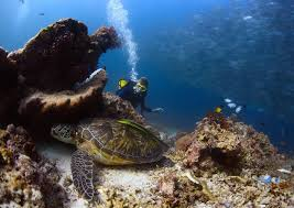 Image result for MOLOKINI SNORKEL TOURS