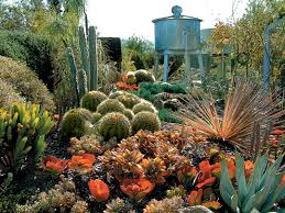 Small Picture Pacific Horticulture Society A Cactus Garden Takes Shape