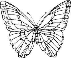 Farfalle Immagine Da Colorare N 13798 Cartoni Da Colorare