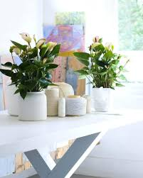 office plants for sale. Exellent Plants Office Indoor Plants For Sale Cool Beautiful House Photos  Low Light On