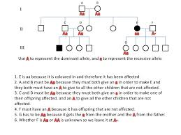 14 Rational Simple Pedigree Worksheet
