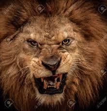 lioness roar front view.  Lioness Lion Roar Front View  Google Search To Lioness Roar Front View L