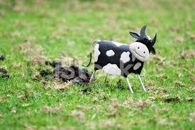Bildresultat för kor som bajsar bild