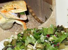 Bearded Dragon Nutrition Chart Nutrition Content