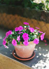 six flowers to your outdoor planters