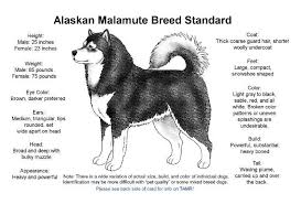 Alaskan Malamute Size Chart Month Weight Height Online Charts Collection