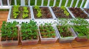 container garden from seed