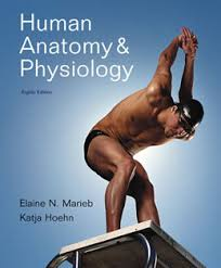 Instructor's Test Bank for Human Anatomy and Physiology, 8th Edition ...