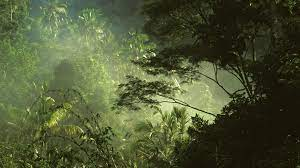 Tropical Jungle Forest Trees HD ...