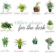 office plants no light. Office Plants No Windows Best Plant Ideas Light For . I