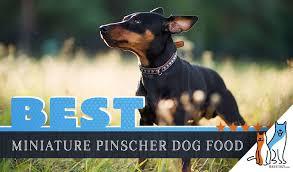 9 Best Miniature Pinscher Dog Foods Plus Top Brands For
