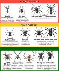 Spider Identification Chart Australia 1000 Ideas About