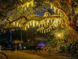 night garden at fairchild by n3ptun0