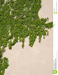 House Wall With Climbing Plants Royalty Free Stock Images  Image Wall Climbing Plants