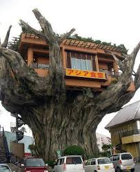 The Most Amazing Treehouses From Around The WorldCoolest Tree Houses