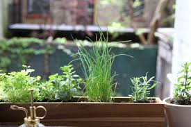 shade tolerant herbs to grow in
