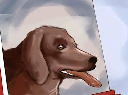 how to paint a portrait of a dog
