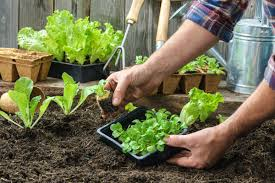 John Scheepers Kitchen Garden Seeds To Get The Most Of Seed Catalog Season Look Beyond The Familiar