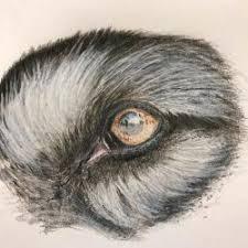 Animal Drawings Cute Easy Cool Eye Big Sad Ardesengsk