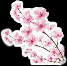 Bunga Sakura Bunga Sakura Sticker By Ainidarasti8