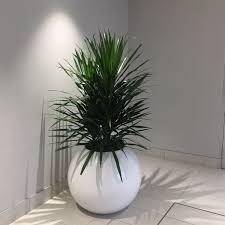 office greenery. We Are An Award Winning Interior Plant Design And Office Rental Company Serving Calgary Canmore. LIVE PLANTS Greenery